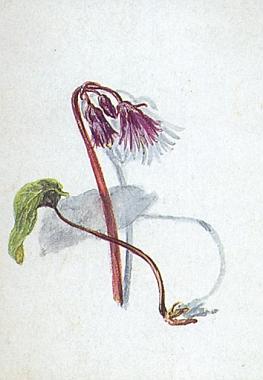 Jedna z jejích kolorovaných kreseb