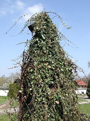 Hrob v Horní Stropnici zarůstá břečťanem