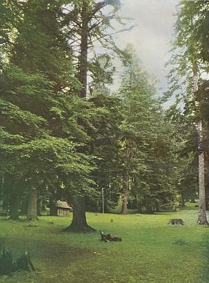"""Tehdy ojedinělá barevná """"přírodní"""" fotografie z míst dnešního """"Háje Hanse Watzlika"""" u Zwiesler Waldhausu"""