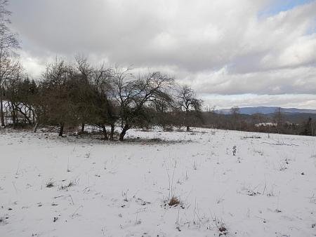 Základy domů a ovocné stromy v zaniklé Skalné