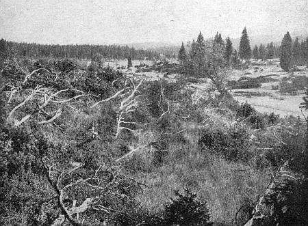 Mrtvý les na jižním úpatí Roklanu