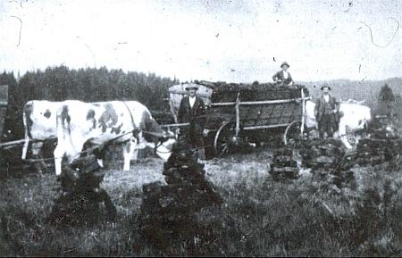 Po zániku sklárny se na Zlaté Studni už jen těžila rašelina, jak dokládá snímek někdy z roku 1940