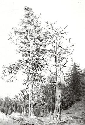 Jedna z kreseb, publikovaných v knize Obrázky ze starých Budějovic, kde je označena jako Lesní partie na Kleti a německá datace na kresbě samé odkazuje snad na 2. prosince roku 1930