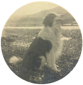 Pes tety Márinky zvaný Harald