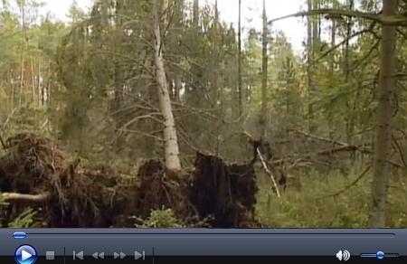 O Červeném blatu a Jiříkově Údolí vyprávěla reportáž České televize v  jednom z dílů Toulavé kamery na podzim roku 2009