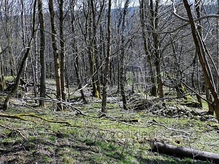 Tady stály domy rodné osady Hinterhäuser, česky Zadní Chalupy