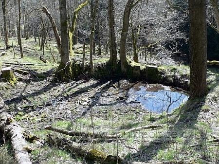 Pozůstatky rybníčku u jednoho z někdejších stavení rodné osady