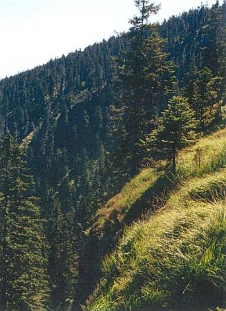 Skalní stupně ve stěně Černého jezera s porosty třtiny chloupkaté (Calamagrostis villosa)