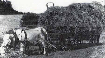 Snímek doprovázející její text Žebřiňákem na útěku přes hranice