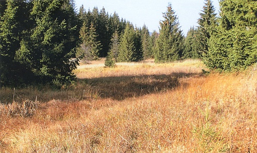 Samovolně vzniklé lesy v přírodní památce Pestřice