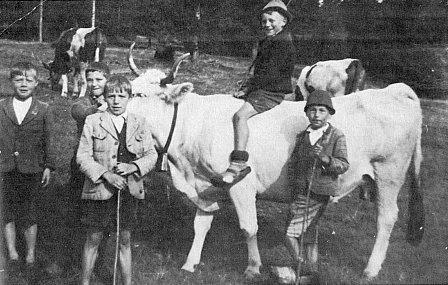"""Na krávě """"Schimmei"""" tj. šimličce, sedí malý Herbert Fastner"""