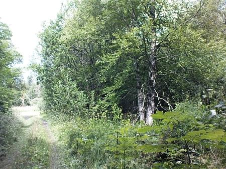 Cesta k někdejšímu Kyselovu