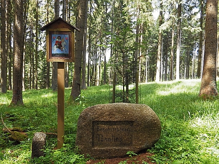 Památník Stifterovy Popsané jedličky v dnes nepřístupných lesích při Knížecím stolci