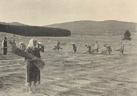 Pokládání lněných stonků k rosení na poli u Přední Štifty (dnes Bližší Lhota), kde ještě v roce 1946 pracovala lnárna a on v ní