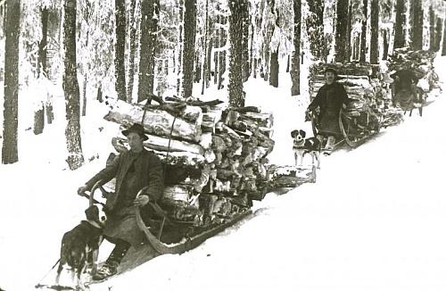 Zimní svážení dřeva ze Smrčiny (1920)