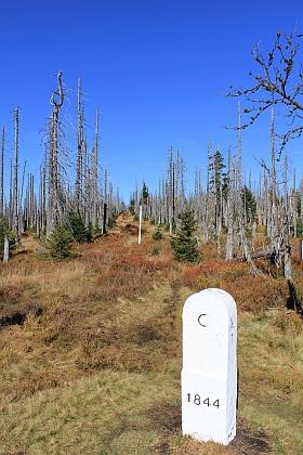 Realita dnešní Šumavy - v některých místech mrtvé stromy převládají nad živými