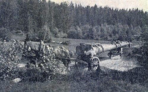 Svážení dříví v lese u Dětochova