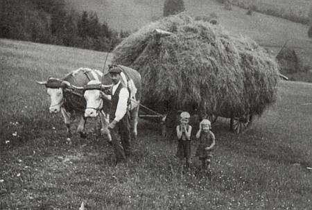 Svážení sena z louky pod rodným domem zvaným Bartlhof v roce 1947, vedle otce, vedoucího volky, stojí opět ona a Walter