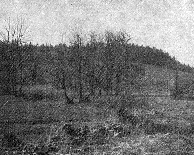 Tady stála osada Ostrá Hora - snímek z roku 1964