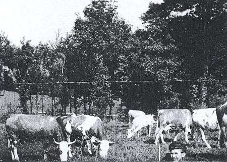 Pasáček krav - malý Hubert Hehenberger
