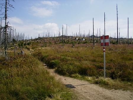 Mrtvý les mezi Trojmezím a Třístoličníkem na snímku z roku 2013