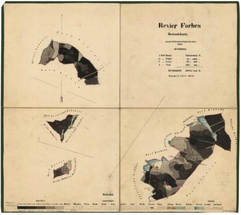 Porostní mapa revíru Forbes (Borovany), kterou zakreslil v roce 1865 (klikněte na náhled pro digitalizovanou mapu)