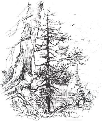 Kresba Heinze Steidla provázející v rodácké knize Winterberg im Böhmerwald (1995) její báseň Erinnerung an 1946 (je to týž text jako ten s titulem Erinnerung an 1946, jehož český překlad je uveden na webových stránkách Kohoutího kříže