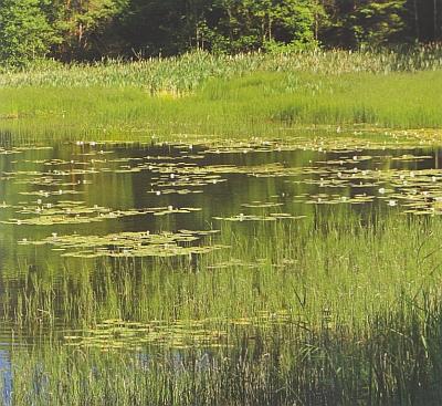 Přesličkový rybník blízko Veveří