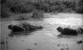 V jeho a mé rodné Soběslavi docházelo vkvětnu 1945 vlokalitě Soliny k ohavnému týrání zajatých vojáků wehrmachtu a k jejich následnému utopení v bahně, čemuž přihlížel početný dav včetně dětí (jedna z žen podle vyprávění pamětníka /viz Soběslavská hláska, květen 2010, s. 11/ na vojáky šlapala, část incidentu byla zachycena amatérským filmařem, viz i Anton Skočdopole)