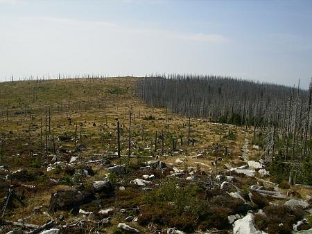 Mrtvý les mezi Trojmezím a Plechým v roce 2013