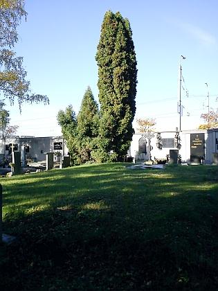 Jeden ze společných hrobů na českobudějovickém hřbitově sv. Otýlie