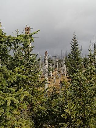 Hraniční lesy pod Roklanem