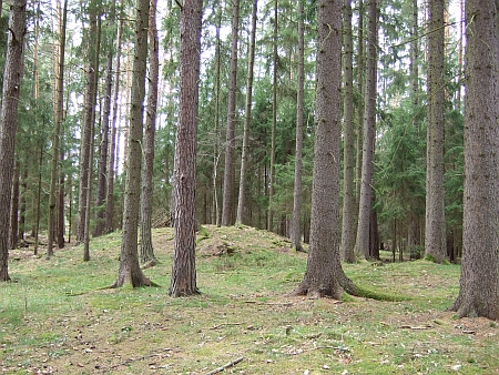 Mohyly z doby halštatské a laténské v lese Kopřivna