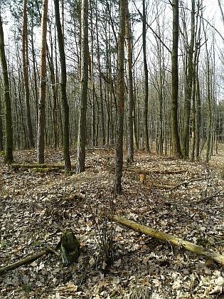 Mohyly v Kotlovském lese na snímcích z roku 2016