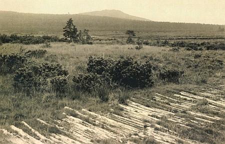 Někdejší haťová cesta mezi oběma Kvildami přes Jezerní slať, v pozadí opět Sokol (Antiglberg)...
