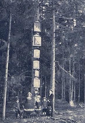 """""""Bildlbaum"""" v  lese u Dolejšího Krušce na snímku. který doprovázel jeho text"""