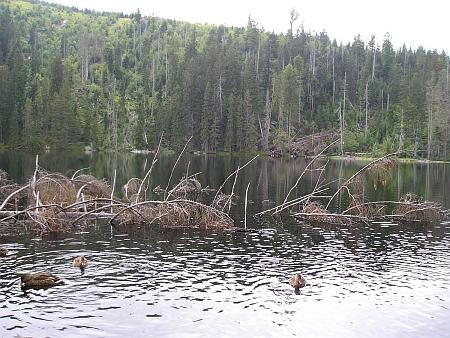 Prášilské jezero se svahem hory Poledník na snímku z července 2012