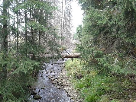 U Javořího potoka
