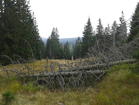 """""""Na Medvědí hoře (Bernsteindl) leží mnoho padlých stromů..."""" -  tato věta z Matzova popisu platí i dnes"""