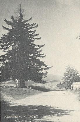Na jeho snímku vidíme tzv. Edelmannův smrk nad Horní Planou, zvaný později Stifterův, vyvrácený větrnou smrští roku 1969, znovu vysazený 7. 5. 2005 za účasti Stifterova jmenovce a potomka...