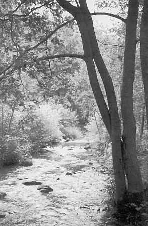 Zlatý potok u Chrobol na snímku, kterým uvedl časopisecký cyklus textů o něm