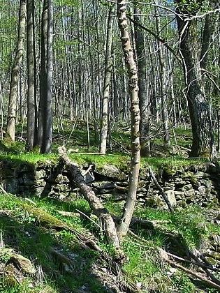 Zbytky zdí Ganglhofu v údolí Úhlavy, odkud odešli Muenchovi do Ameriky