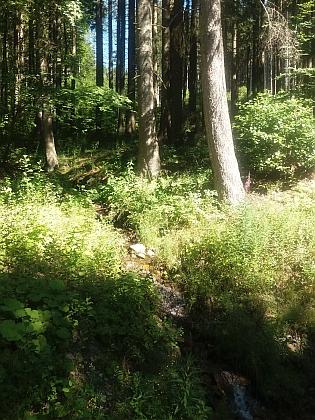 Potok Slatinka (Schütterbach) na svahu Špičáku