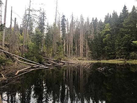 """Poslední """"Bojer"""" z Huťského Dvora Franz Köck s rodinou u vlastní dřevěné stavby"""