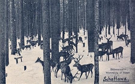 Pohlednice ze Zátoně zachycuje zimní krmení zvěře na Boubíně někde u Idiny pily kolem roku 1900
