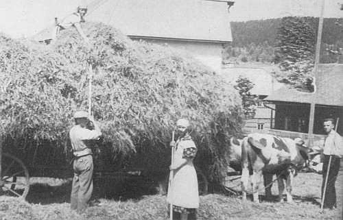 "Pan farář vpravo u potahu pomáhá v Bockhütte (část dnešních Nových Hutí) ""o senách"" (""bei der Heuernte"")"