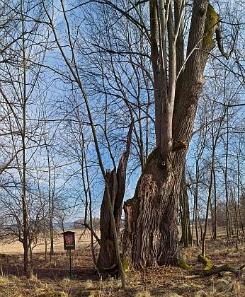 Lípa na Babí je památníkem zaniklé osady (viz heslo ve Wikipedii)