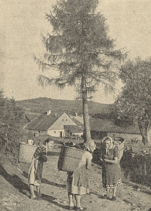 Z někdejšího Glaserwaldu (dnes zaniklá Skelná), zachyceném jako pozadí rozpravy tří sběraček brusin,     pocházela jeho matka ateta, od níž slýchával v dětství šumavská lidová vyprávění