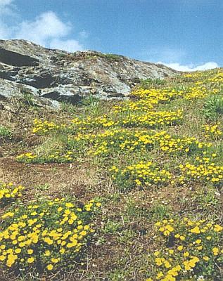 Skalní výchozy amfibolitu s porosty mochny jarní na západním okraji Ctiboře