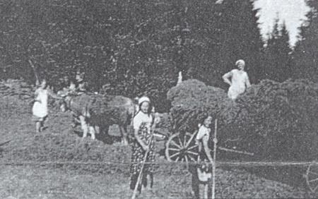 """Matka na fůře, Anna v šátku při kravském povoze, za loukou les zvaný """"Sagers Woid"""""""